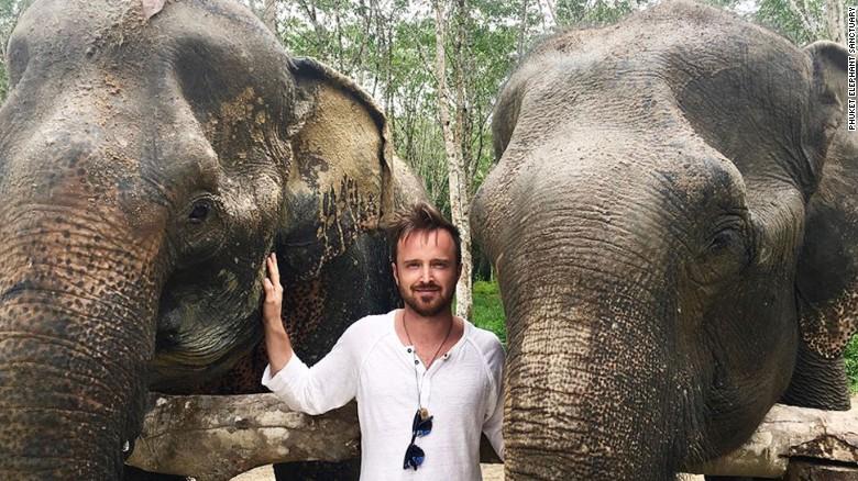 Actor-Aaron-Paul-at-Phuket-Elephant-Sanctuary